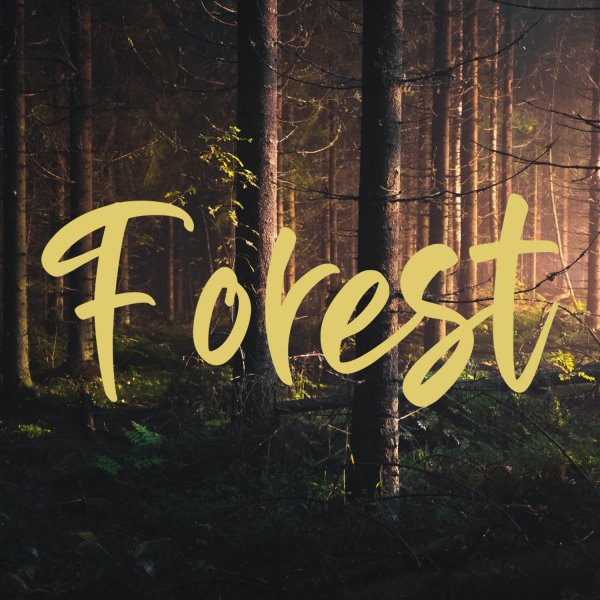 Forest | Happy